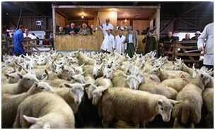 英农业机构担忧脱欧将导致英国当地食品价格飙升