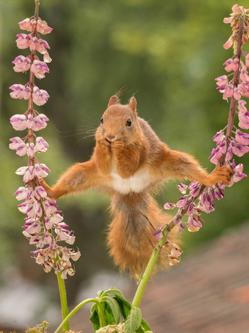瑞典男子花园拍摄松鼠劈叉觅食瞬间