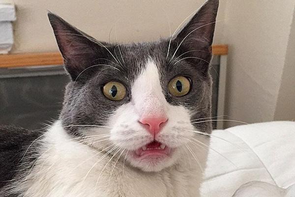 英小猫滑稽照片惹人爱 曾因太调皮被抛弃多次
