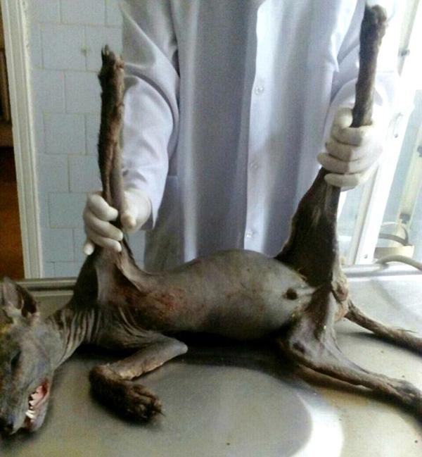 """乌克兰农民杀死传说中的""""吸血怪物"""""""