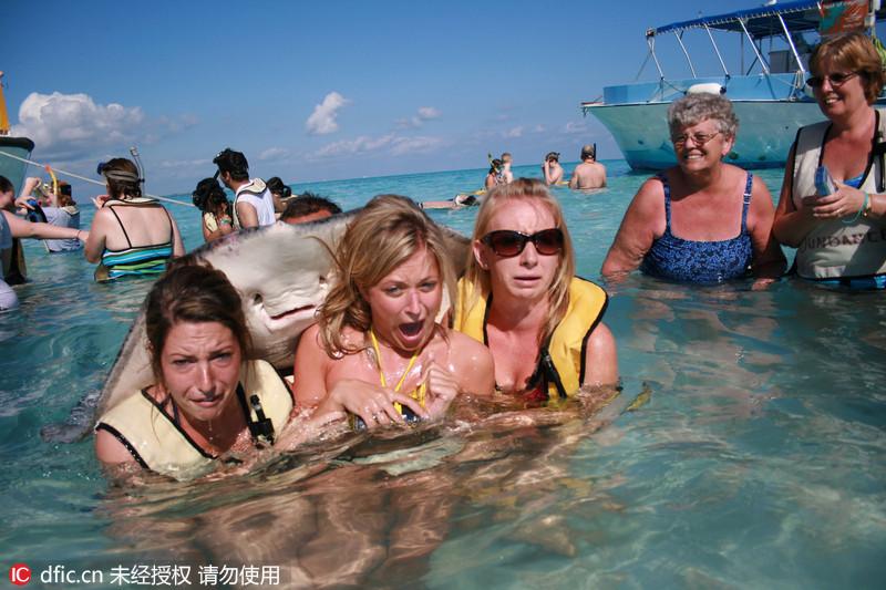 """三名女子身穿比基尼在开曼群岛的海水中合影时,意外遭遇一只巨大的赤魟鱼""""贴身"""",这三名女子被吓得花容失色。据报道,这三名女子身穿比基尼,微笑着正准备拍照合影。但当摄影师按下快门时,一只赤魟鱼却突然出现在三名女子背后,并紧紧贴住她们的背部。合照的女士们被这一幕吓得不轻,镜头也拍下了女游客们花容失色的画面。Kendall Harlan/Whitehotpix/东方IC"""