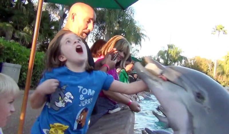 当地时间2012年12月报道,美国佛州,Jamie Thomas在网上公布了一段自己女儿遭海豚袭击手部被咬伤的视频。他8岁的女儿Jillian当时正在喂海豚,突然这只海豚从水面跃起,紧紧的咬住装满鱼儿的硬纸盒,并且咬到了Jillian的手。Gavin Rodgers / Rex Features/东方IC