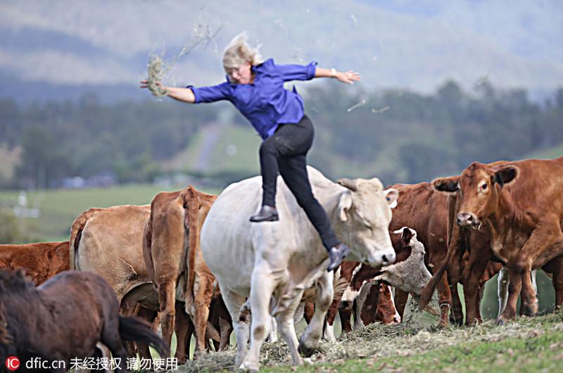 当地时间2014年5月15日,澳大利亚昆士兰,Nerida Leis被一头正在闹脾气的牛甩到了空中,回忆起那个过程,Nerida表示,这感觉非常不真实,我在半空中的时候,脑子里在想:我的天啊,我在这里干什么。我甚至还有时间看蓝天白云,思考到底发生了什么。当我落到地面上的时候,才感觉到疼痛。Jamie HansonNewspixREX/东方IC