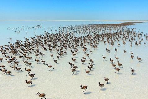 土耳其火烈鸟群似布阵大军 造型百变