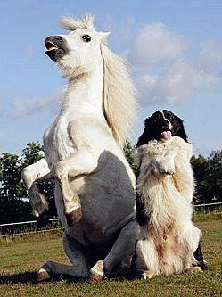 搞笑呆萌的动物世界
