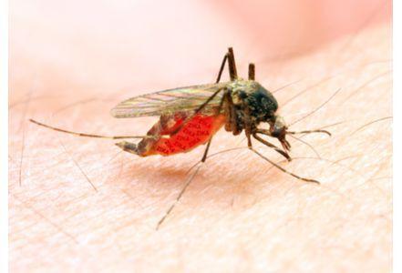 法研究显示部分驱蚊产品有毒 孕妇儿童应谨慎使用