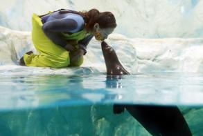 国际接吻日:动物亲吻爱意满满