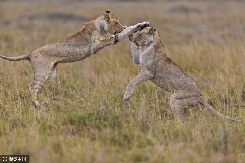 动物捕食高清大图