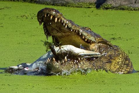 动物互相残杀尽显自然法则的冷酷