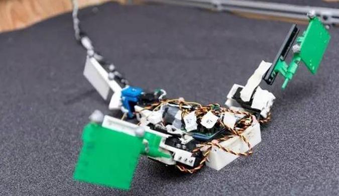 科学家打造机器人版弹涂鱼 可水陆两栖爬行