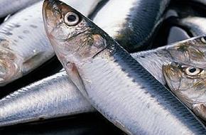 鳕鱼市场乱象:不同品种价格相差数十倍