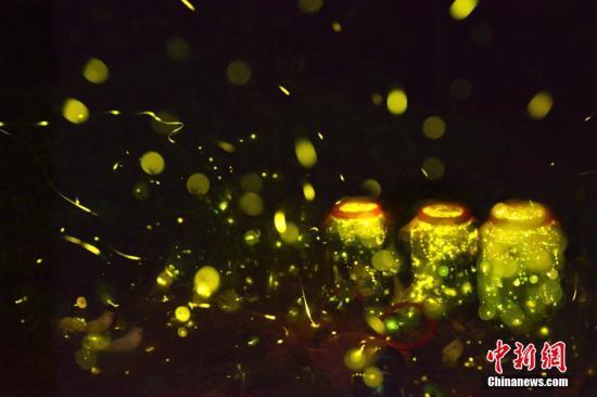 南京牛首山欲放生10万萤火虫引争议 活动已取消