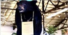 黑熊误食40罐毒品 死31年后屹立不倒