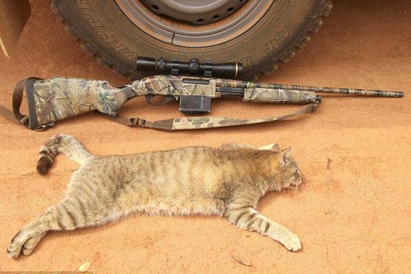 澳自治团专杀流窜宠物猫 网晒死猫引争议