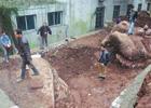 男子挖水池挖出庞然大物