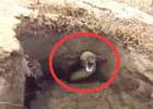 扫 墓发现一洞瞬间傻眼