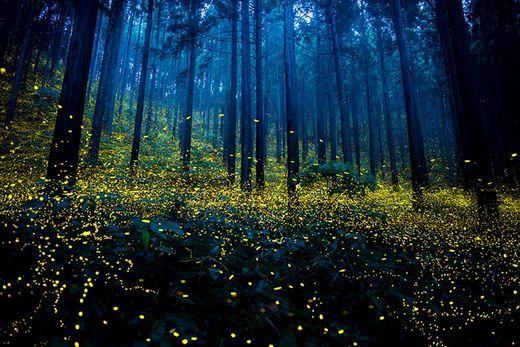 摄影好手所拍下的真实萤火虫世界!