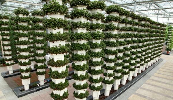 江苏海安现代农业园展示未来科技农业美好前景