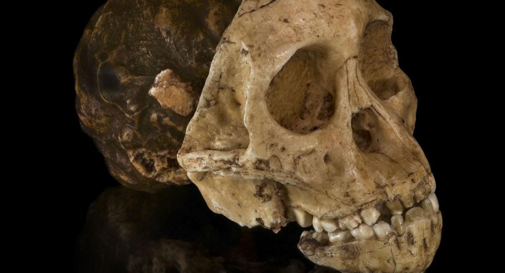 丹麦西兰公国岛发现一个具有奇特形状的头骨.