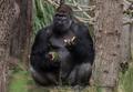 动物园动物啃西瓜