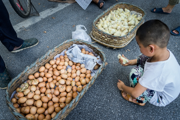 江苏无锡:高温袭城 商贩马路上孵小鸡