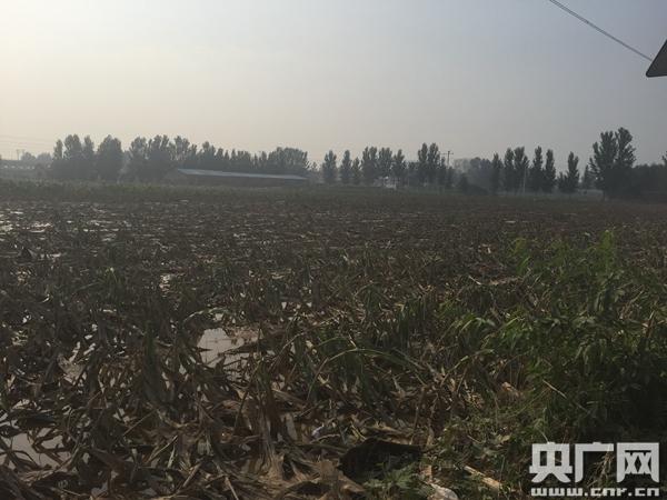 河北邢台洪灾:七里河大贤村安全隐患存在已久