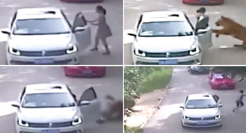 当地时间2016年7月23日,在北京延庆八达岭野生动物园内,两名自驾游女游客在猛兽区下车后,被老虎袭击,造成1死1伤。据悉,发生事故的是一家四口,包括三个大人一个孩子,车辆行驶至猛兽区的东北虎园里,年轻男女在车内发生口角,女子突然下车去拽男司机的车门,结果被蹿出来的老虎叼走。年长的女子在下车救年轻女子的时候被另一只老虎叼走,当场死亡,年轻女子身受重伤,被送往医院抢救。