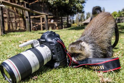 肯小猴抢摄影师相机 撅屁股玩自拍