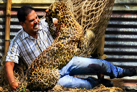 全球动物袭击人类的惊魂瞬间