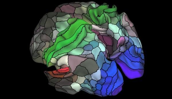 科学家在人类大脑发现97个新区域