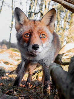 摄影师拍神秘野生动物世界引关注