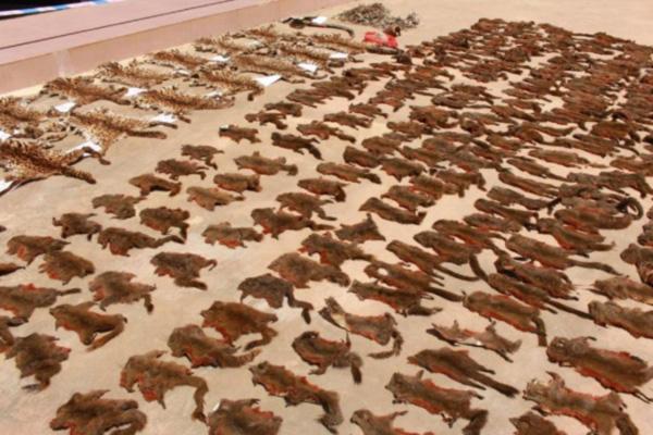 云南警方查获大量野生动物死体