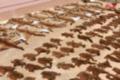 云南警方查获大量野生动物死体 触目惊心
