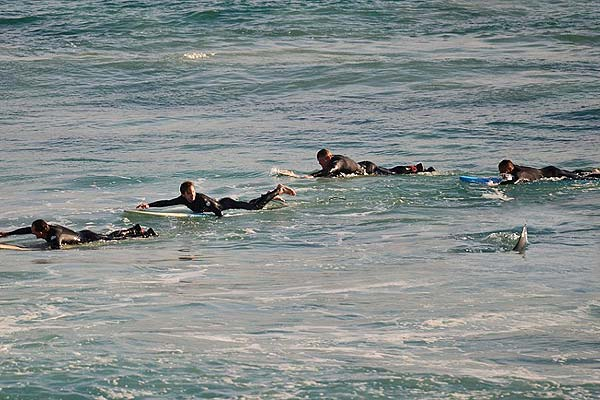 拼命!澳冲浪者手脚并用划水逃离近在咫尺鲨鱼