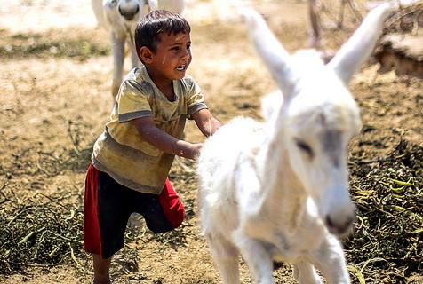 加沙贝多因族儿童缺衣少食与牲畜相伴