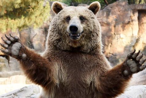 棕熊眼巴巴等食物伸双臂暴露吃货本质