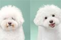 狗狗剪发前后颜值突变
