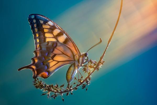 微距镜头下的昆虫世界 光影斑驳梦幻似童话