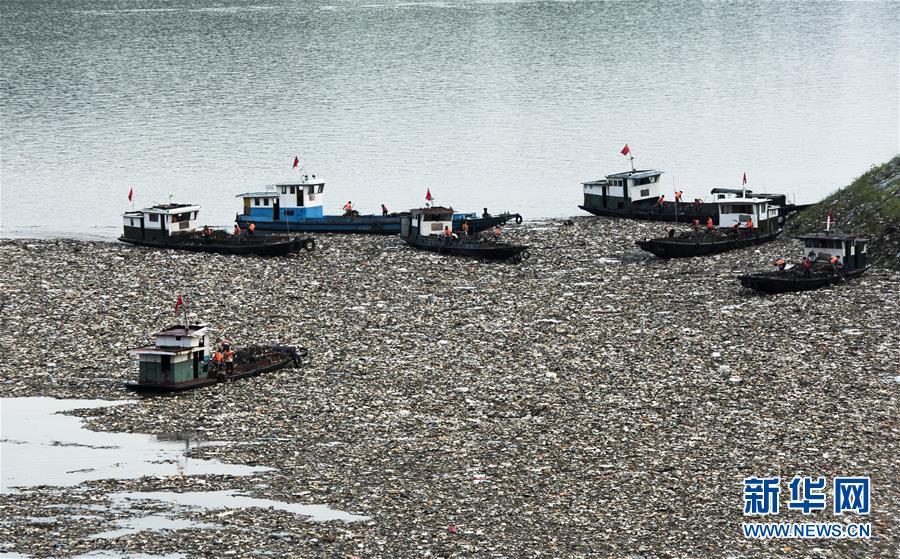 三峡水库现大量漂浮垃圾 工人冒酷暑清污
