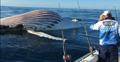 渔民发现庞大鲸鱼尸