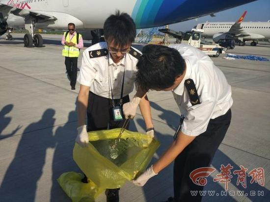西安一架入境航班上发现活体蛇 藏在毛毯袋中