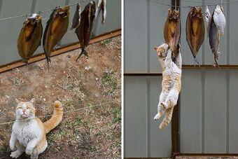 """动物也贴秋膘 使出""""洪荒之力""""吃吃吃"""