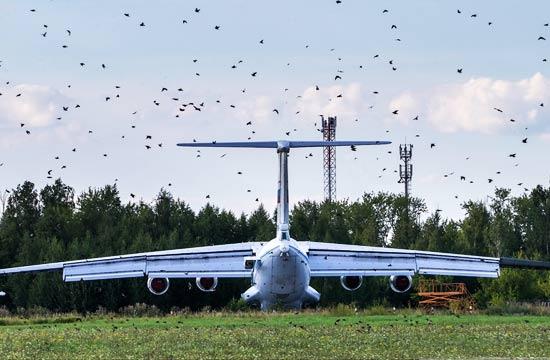 俄军机场全是鸟战机照飞不误