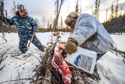 摄影师拍西伯利亚捕狼人日常狩猎生活
