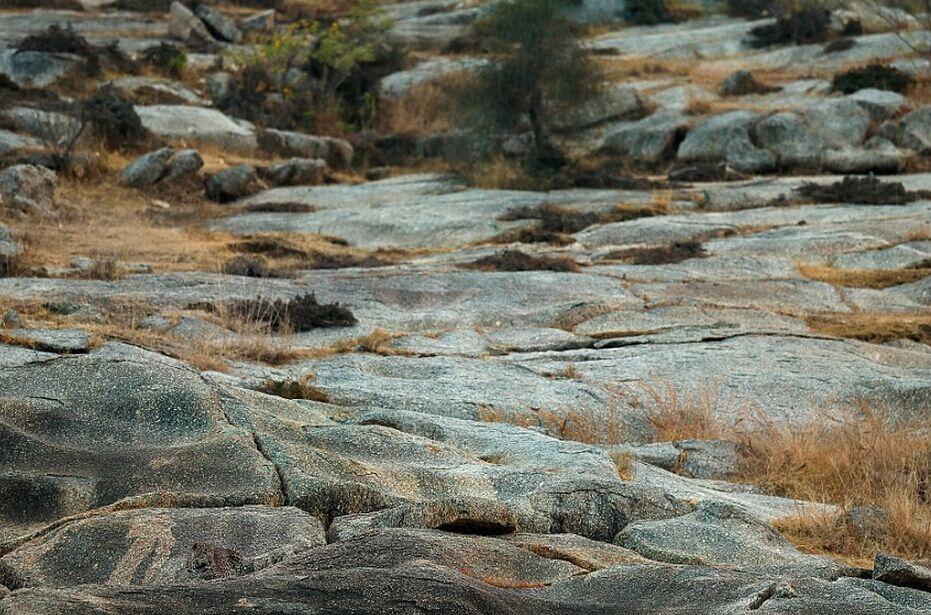 猎豹与周围岩石融为一体 你能找到吗?
