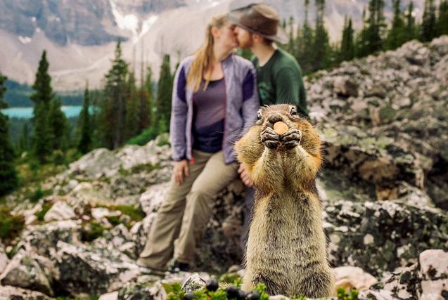 图片一周精选 情侣拍订婚照被小松鼠抢镜