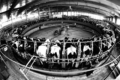 原奶产业再陷危局:收奶价格已至盈亏线 交奶就是赔钱