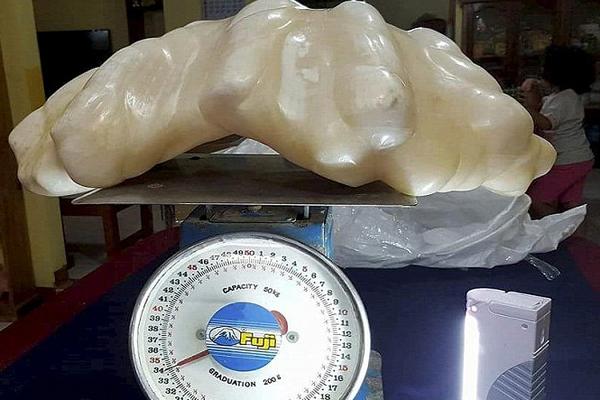 菲渔民发现世界上最大珍珠:价值1亿美元  重34公斤