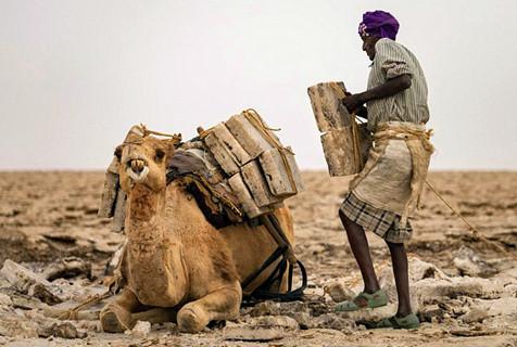 埃塞俄比亚盐矿工60度高温下辛苦劳作