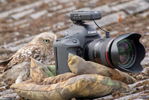 小猫头鹰玩相机当摄影师给同伴拍照